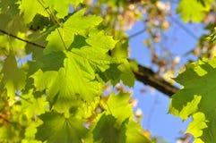 Verdant leaf Stock Image