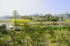 Verdant orchard near pond in sunny spring Royalty Free Stock Image