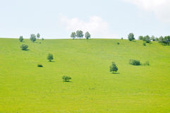 Verdant pasture and tree Royalty Free Stock Photography