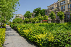 Verdant pavement before dwelling buildings in sunny summer Stock Photography