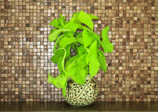 verdant plant in flowerpot Stock Photos