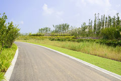Verdant plants by curving asphalt road in sunny summer Royalty Free Stock Photography