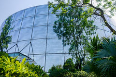 Verdant plants before glass-walled building in sunny summer afte Stock Photography