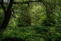 Verdant plants and trees in modern city of sunny summer Stock Photos