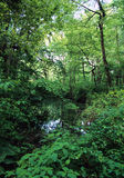 Verdant Pond. Lush pond surrounded by trees and vegitation.  Navy Cooperative , Manorville, New York Stock Image