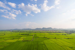 Verdant rice paddies. Soon as the harvest season Stock Photos