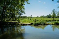 Verdant riverbank in sunny summer Royalty Free Stock Photo