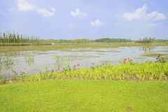 Verdant shore of lake in sunny summer Royalty Free Stock Photography