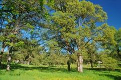 Verdant spring landscape Stock Image