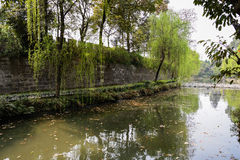 Verdant spring out side ancient wall,Chengdu Royalty Free Stock Images