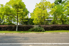 Verdant trees by asphalted road in sunny summer Royalty Free Stock Photography