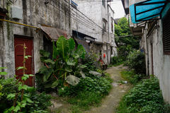 Verdant unpaved alleyway between dilapidated dwelling buildings Royalty Free Stock Photography