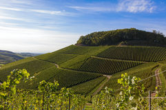 Verdant vineyard landscape and hills in summer Stock Photo