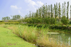 Verdant waterside of pond in sunny summer Royalty Free Stock Images
