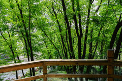 Verdant woods outside wooden handrail Stock Image