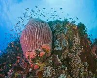 Verde海岛,菲律宾原始珊瑚墙壁礁石  库存图片