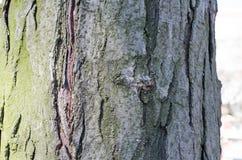 Verde Árvore Casca de madeira E nave r Textura de madeira Texturas naturais Fundo Backgrou de madeira imagens de stock