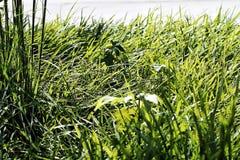 Verde Immagine Stock Libera da Diritti