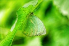 Verde Imagen de archivo libre de regalías
