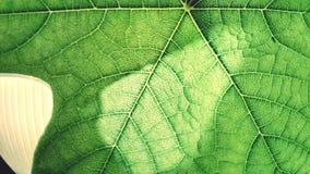 Verde Fotos de archivo libres de regalías