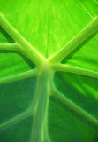 Verde Foto de Stock Royalty Free