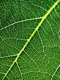Verde Fotos de Stock