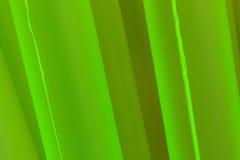 Verde Fotografía de archivo libre de regalías
