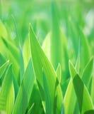 Verde Imagem de Stock Royalty Free