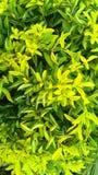 Verde Fotografia Stock
