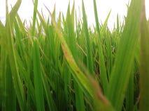 Verde fotografie stock