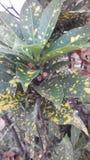 Verde Imagens de Stock Royalty Free