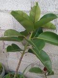 Verde Imagem de Stock