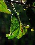 Verde fotografie stock libere da diritti