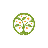 Verde abstracto aislado de la forma redonda, logotipo anaranjado del árbol del color Logotipo natural del elemento Hojas e icono  Foto de archivo libre de regalías