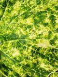 Verde abstracto de Nayural Foto de archivo libre de regalías