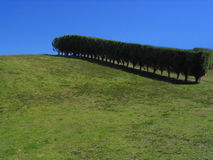 Verde, alberi e cielo blu Immagine Stock