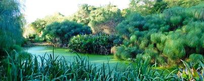 Verde all over Fotografia de Stock Royalty Free