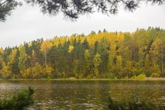 Verde amarelo Autumn Forest Backdrop Ladoga Lake Karelia Rússia imagem de stock