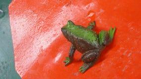 Verde animale del giocattolo dell'acqua della rana Fotografia Stock Libera da Diritti