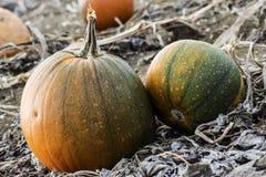 Verde arancio di autunno della zucca fotografia stock libera da diritti