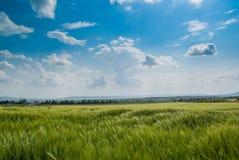 Verde archivado debajo del cielo azul Fotografía de archivo
