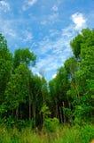 Verde azul Fotografia de Stock Royalty Free