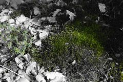 Verde bianco nero fotografia stock