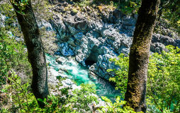 Verde bluastro Fotografie Stock Libere da Diritti