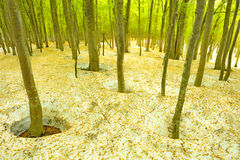 verde bom e novo da árvore Imagem de Stock