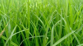 Verde bonito Foto de Stock Royalty Free