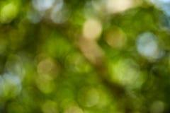 verde bonito da natureza Imagens de Stock Royalty Free
