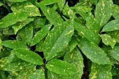 Verde bonito da planta com pontos amarelos imagem de stock royalty free