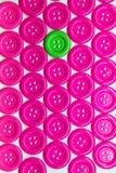 Verde-breasted en rosado-pecho en blanco Fotos de archivo libres de regalías