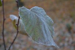 Verde chiaro solo dell'albero della foglia di autunno coperto di gelo sui precedenti del parco di autunno Immagini Stock